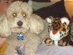 Mocha's favorite toy. (that Jake hasn't eaten yet)